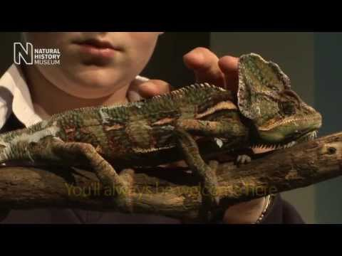 Take a virtual tour of the Museum | Natural History Museum