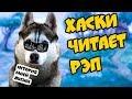 ХАСКИ ЧИТАЕТ РЭП История моей Бандитской жизни Говорящая собака mp3