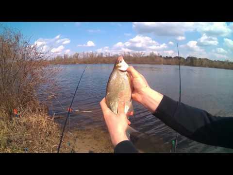 рыбалка тарань днепр
