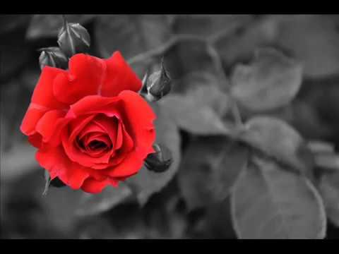 Sundor Nobojatak - Bengali Kobita Ophekha 2012 (the poem make you cry ...