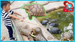 น้องบีม | ให้อาหารเต่า เที่ยวกาญจนบุรี สวนสัตว์ค่ายสุรสีห์