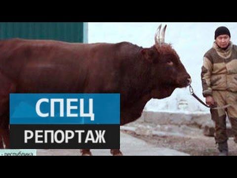 Калмыкия - республика возможностей. Специальный репортаж Ксении Кибкало