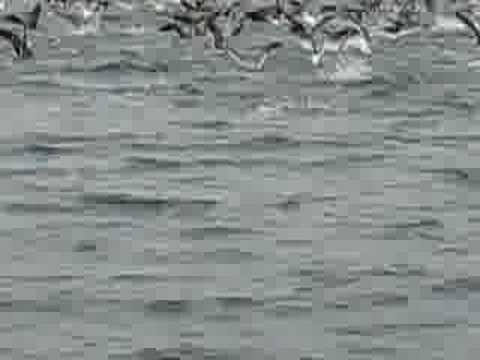 Birds fishing in Banderas Bay, Mexico