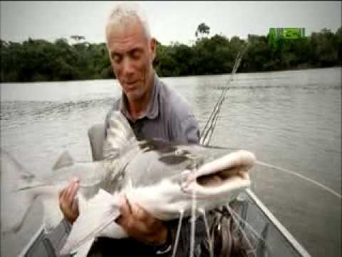river monsters catfish eats man