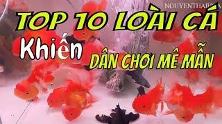 cantho travel top 10 loài cá cảnh đẹp sang chảnh - cần thơ ký sự
