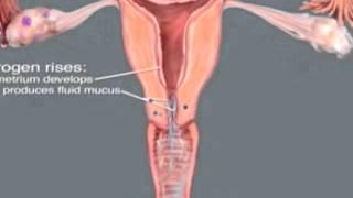 Método Ovulação Billings