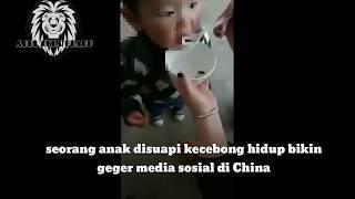 Anak Kecil Makan Kecebong Hidup | viral