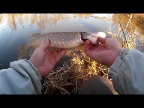 ловля окуня в марте на реке