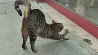hot pussy stretching