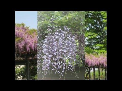 大木実の画像 p1_31
