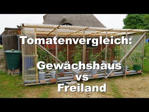 Rundgang Durch Den Garten: Tomaten Im Freiland Vs Gewächshaus