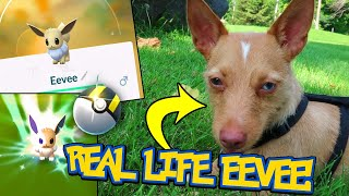 REAL LIFE EEVEE SHINY HUNTING ON POKEMON GO COMMUNITY DAY! (2018 event)