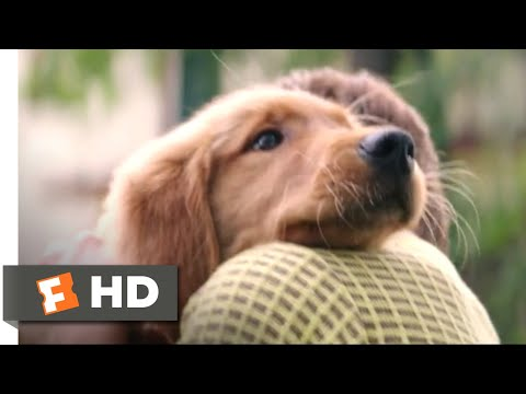 A Dog's Purpose (2017) - I Had A Boy Scene (1/10) | Movieclips