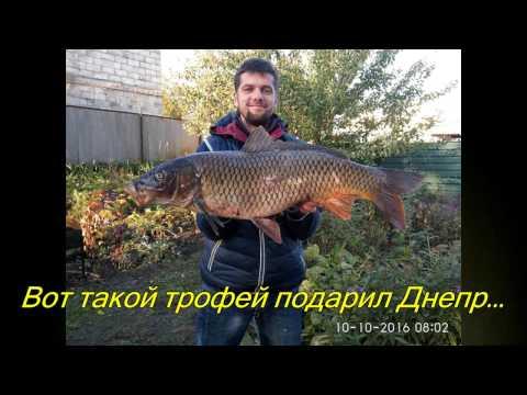 видео трофейный сазан
