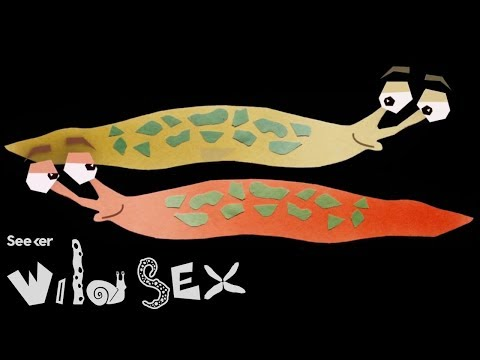 If You Think Your Sex Life Is Tough, Try Being A Slug thumbnail