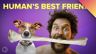 How Dogs Became Our Best Friends (ft. MinuteEarth!)