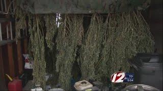 Marijuana Plants Found in Westport Woods