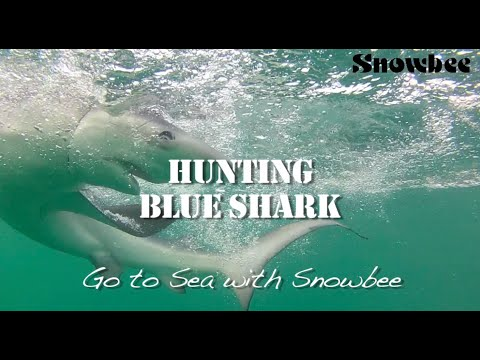 How to Catch Shark - Blue Shark Fishing- Sea fishing tips - Sea fishing rods - sea fishing reels