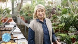 Vegetable Garden Basics - ASK MARTHA - Home How-To Series - Martha Stewart