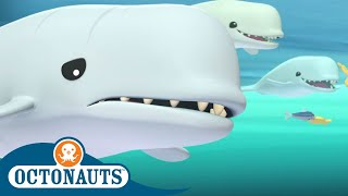 Octonauts - Dolphins Love Fish Biscuits   Cartoons for Kids   Underwater Sea Education