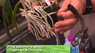 Central Florida Gardening - Orchids at Home