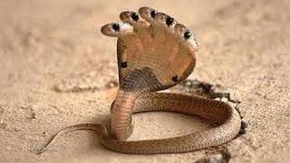 Video clip Top 10 loại rắn 'dị' nhất thế giới