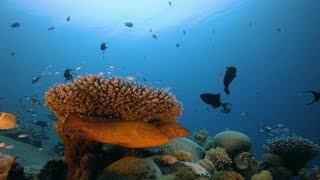 Underwater Tropical Colorful Seascape | Stock Footage - Videohive