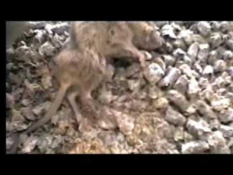 animal testing cruelty pictures. Animal Testing Cruelty