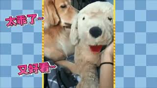 Funny CATS and DOGS Compiations 32 | PETS 2018