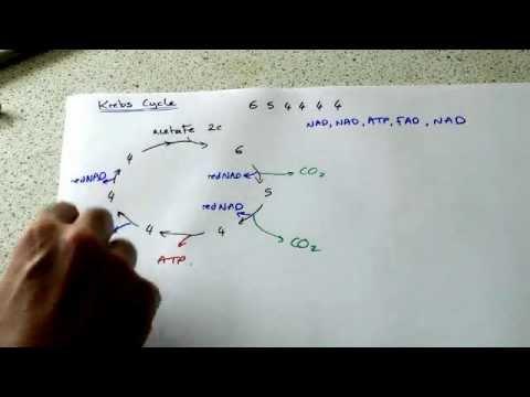 ocr a2 biology coursework 2012