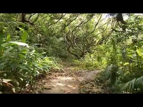 The Ceiba Trail at Curú Wildlife Refuge with Excursiones Costa Rica