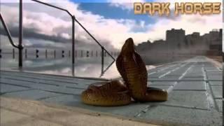 Video clip Những loài rắn độc nguy hiểm nhất thế giới