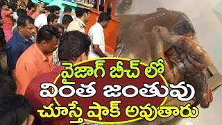 Mysterious Creature Fish found in Vizag beach | TopTeluguMedia