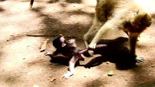 Break-heart pity Daniela! Cruel Deedee doing like this, baby so tired, want milk from Dana!