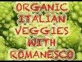 ORGANIC ITALIAN RECIPE ( WITH ROMANESCO VEGGIE)