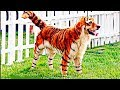 RAREST CROSS BREED ANIMALS