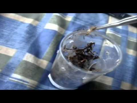 Tarantula Feeding Video 55