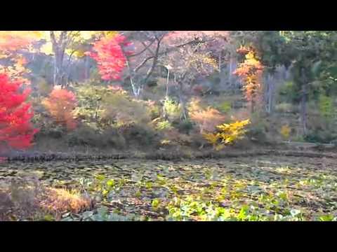 磐梯熱海温泉 万葉の宿  八景園〜紅葉の庭園を散策〜