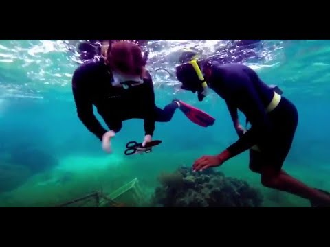 Coral Reef Restoration in the Caribbean