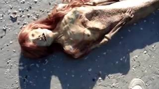A Dead Mermaid Discovered in Florida