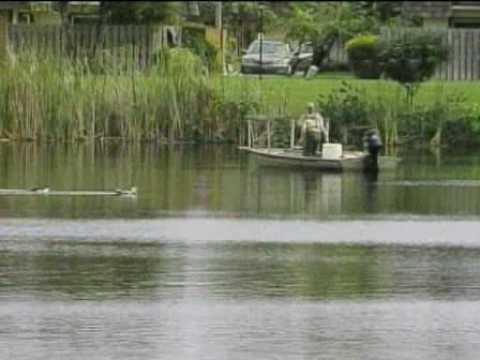 Fish Found in Florida Found in Florida Pond