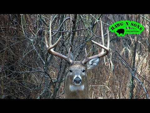 Hunting Whitetail Deer Buck Charges Hunter - Animal Attacks Dec 30