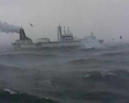 northern jaeger in the bering sea A SEASON 2008