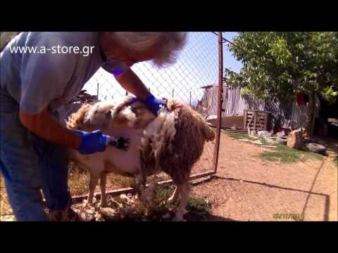 Sheep Shearing Machine 500W - Easy Cut 302