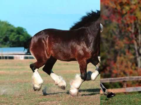 caballo de patas blancas lyrics: