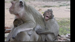 Popeye got a new more baby monkey was crying ask for milk, He cries cos mum do not let him get milk