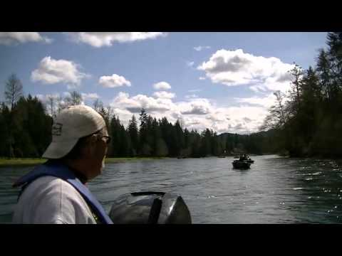 Cowlitz river fishing