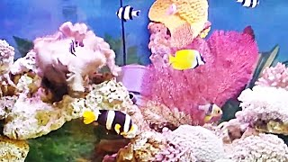 Indahnya Ikan Hias Air Laut di Akuarium - The Beauty of Salwater Fish in Aquarium