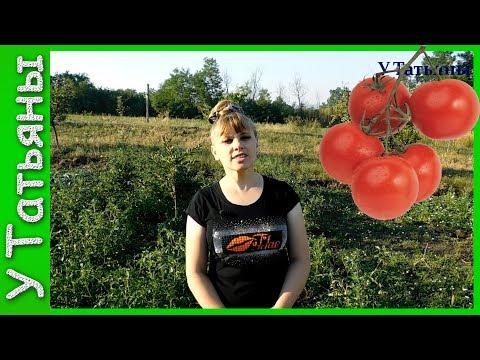 ТОМАТЫ /помидоры/ в ОТКРЫТОМ ГРУНТЕ. Как вырастить томаты на огороде. Подкормка /удобрение/ томатов.