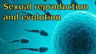 On Sexual Reproduction and Evolution (MGTOW)